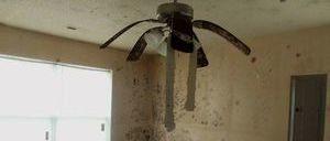 Mold Infestation In Living Room